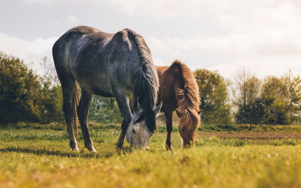 cana foundation why-is-biodiversity-important blog horses grazing