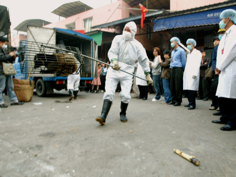 Guangzhou government officers seize civet cats in the Xinyuan wildlife market in Guangzhou to prevent the spread of the SARS disease, January 5, 2004. Dustin Shum/South. China Morning Post via Getty Images.