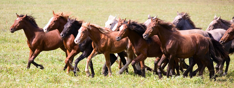 horses run the world
