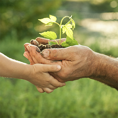 Tree planting to help the world